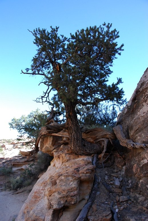 tree growing in rocks